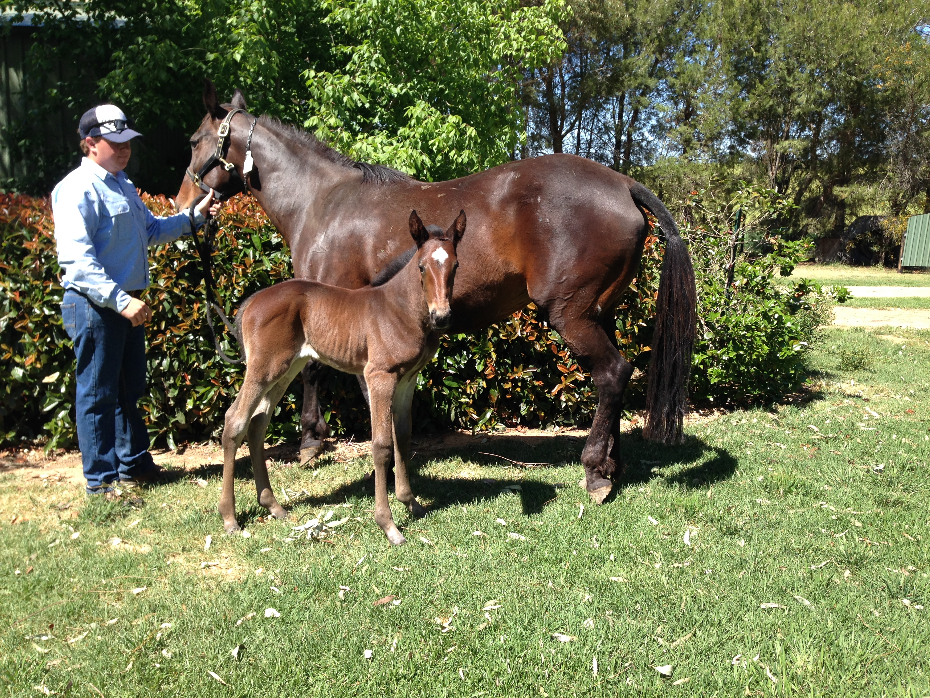 African Dancer Filly