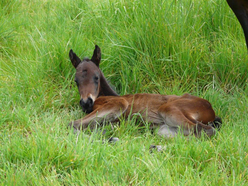 Grace Robinson Filly