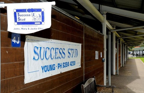 Yearlings Sales Signage