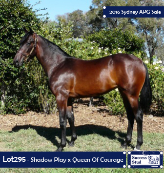 Lot 295 - Shadow Play - Queen Of Courage