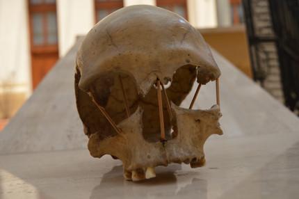 Ancient DNA and understanding European genetic history