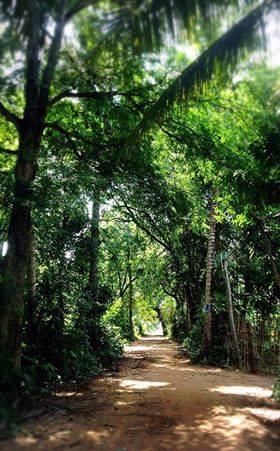 【緑のトンネルの先】