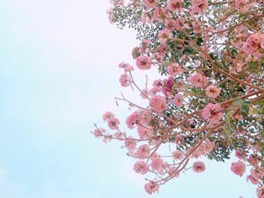 【桜色🌸】