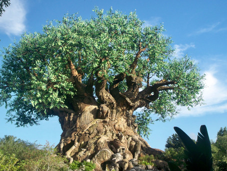 Hot Take: Animal Kingdom is a Full Day Park