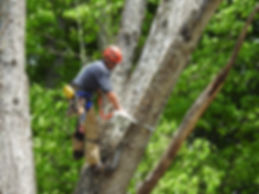 Cumming Tree Services