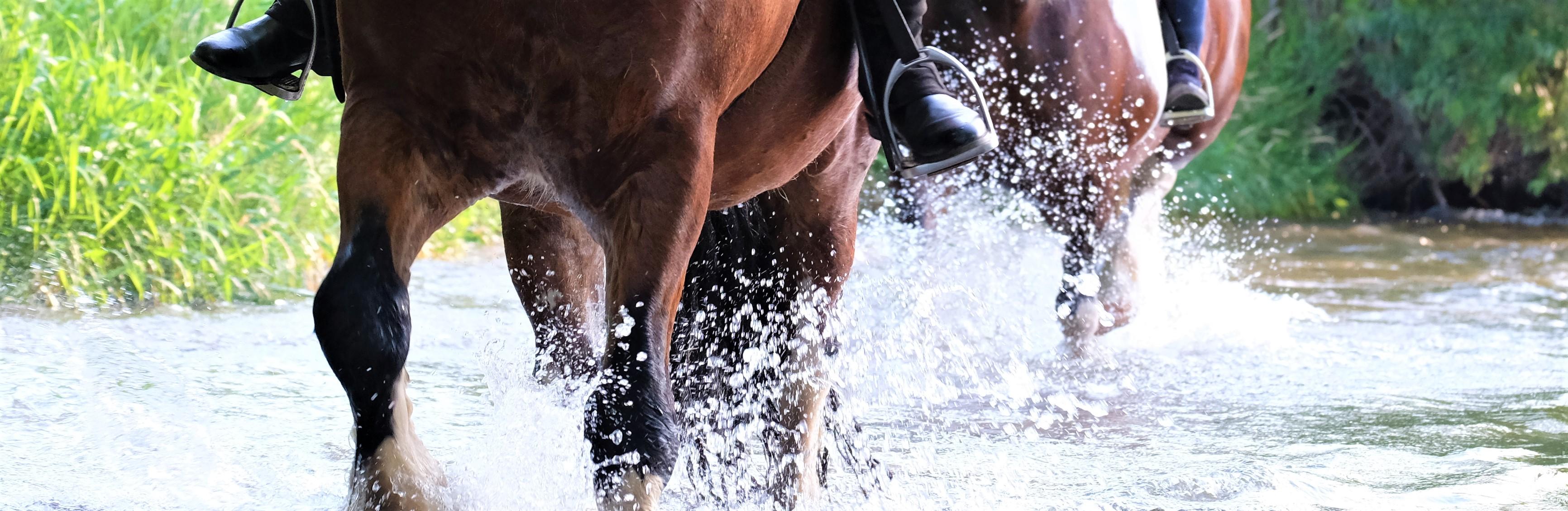 Llannerch River Ride 1 Aug 2019 (49)