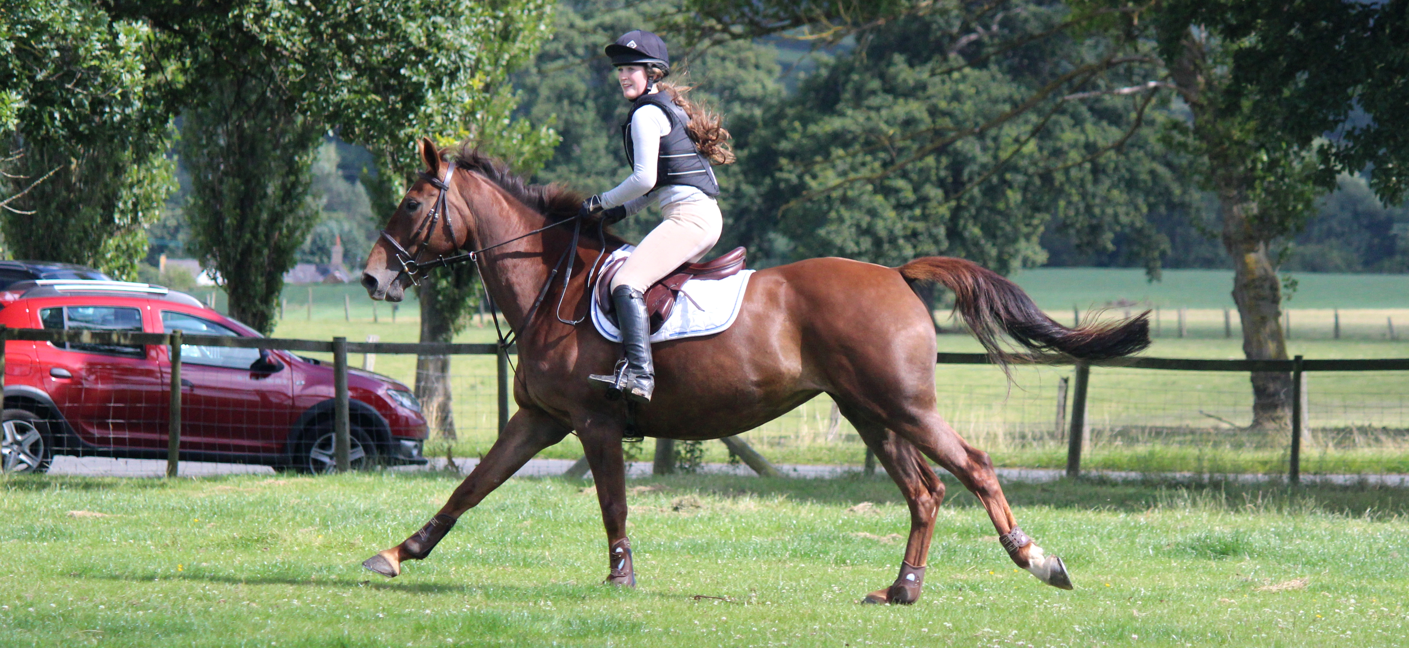 horse riding & livery yard st asaph