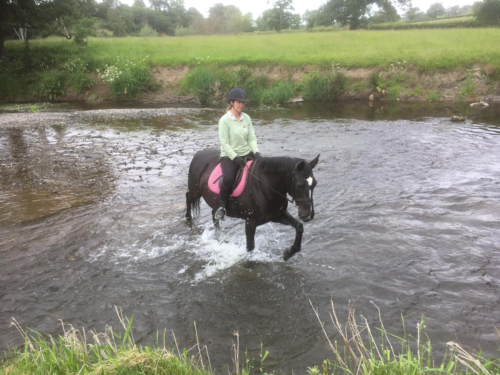 Llannerch river black horse
