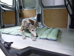 Van Nien être et épanouissement cani