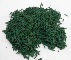 Algue spiruline