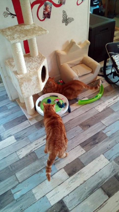 Coco et Garfield