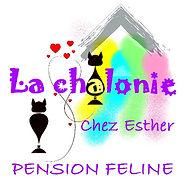 La Chalonie, pension pour chats à Saint Pierre les Elbeuf en Normandie près de Rouen