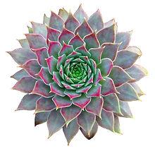 Succulent Clip Art.jpg