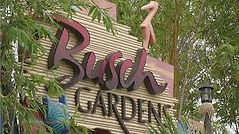 busch gardens.jfif