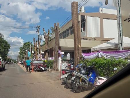 4RESTER : Application เพื่อการอนุรักษ์ต้นไม้ในเมือง
