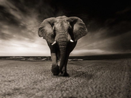 Anticipatory Grief: The Other Elephant in the Room