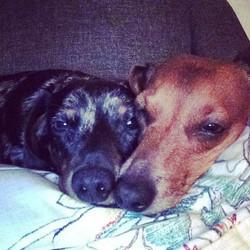 Roxie&Hunter
