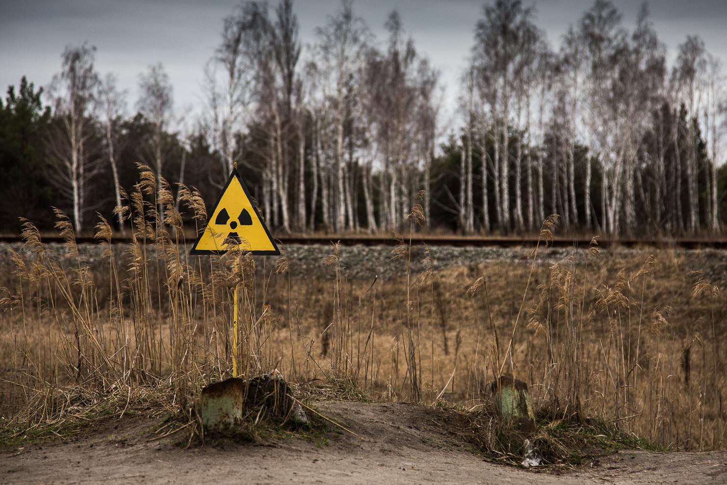 La forêt rousse, hautement radioactive