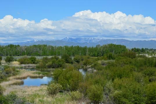 silver creek reserve.JPG