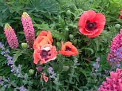 Flowers.1.jpg