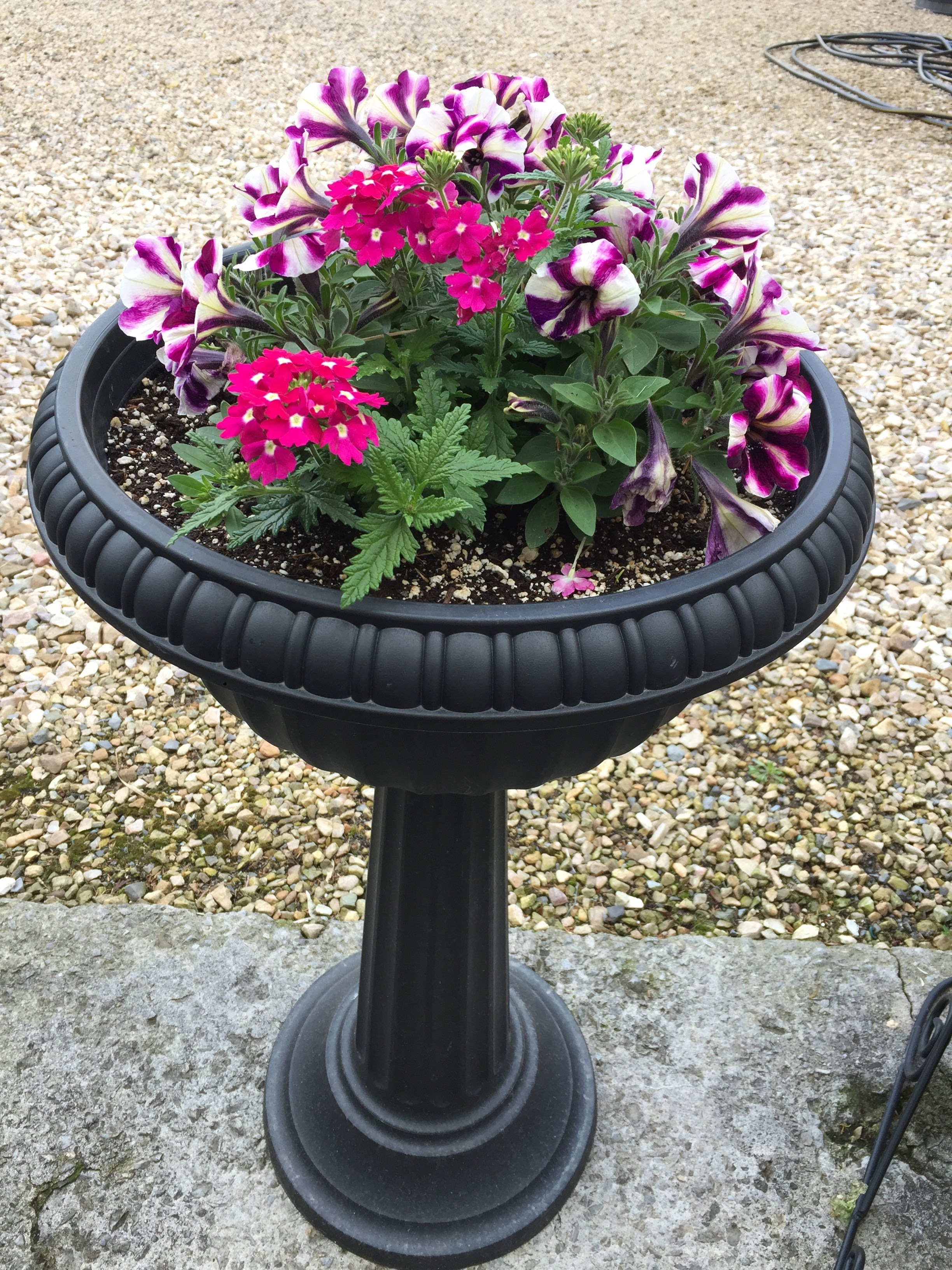 Petunia combo Urn planter_