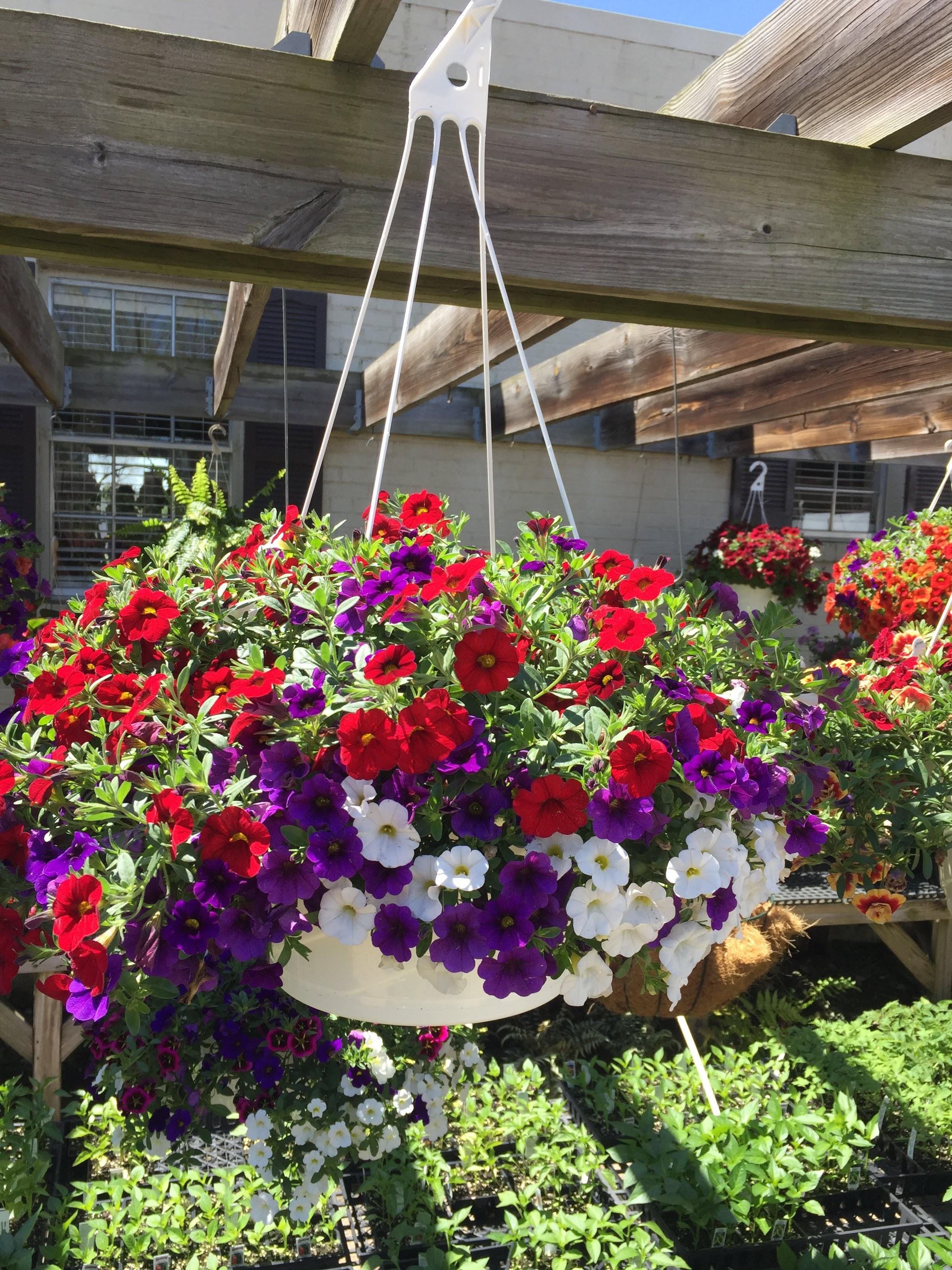 "12"" Hanging Baskets-Petunia combo_"