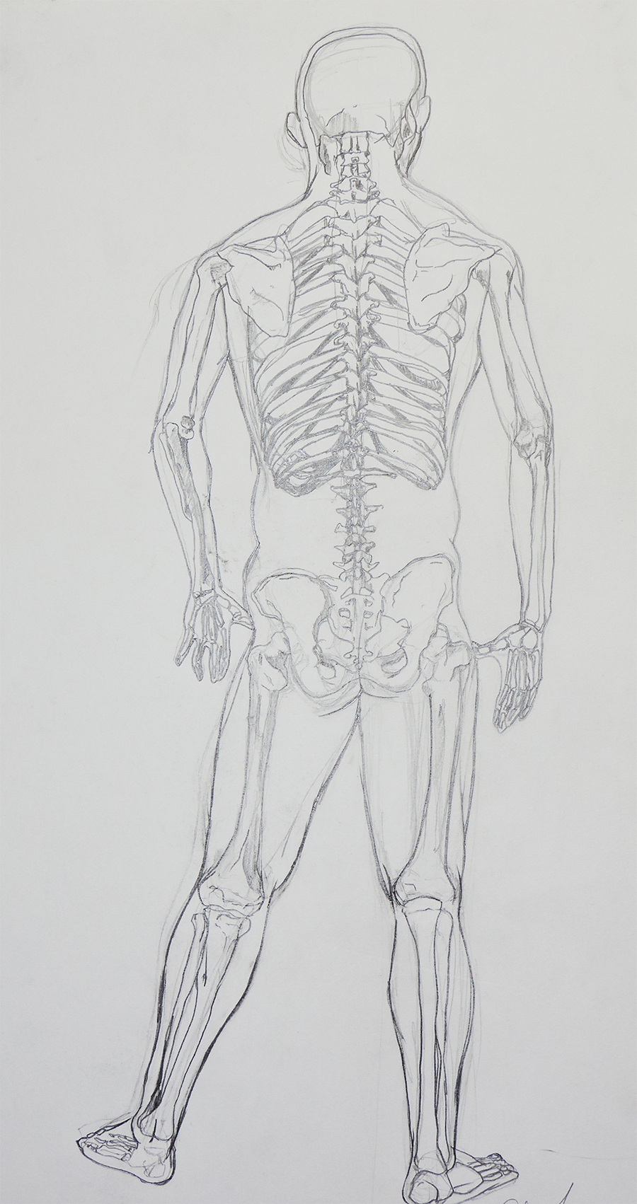 Skeleton_Back