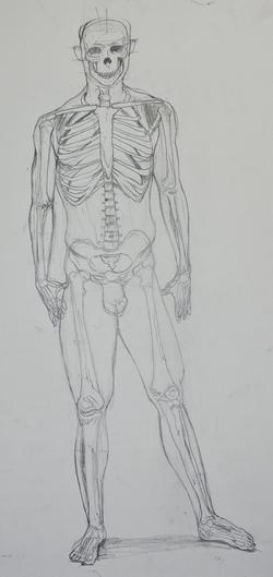 Skeleton_Front
