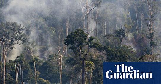 amazon-rainforest-008.jpg
