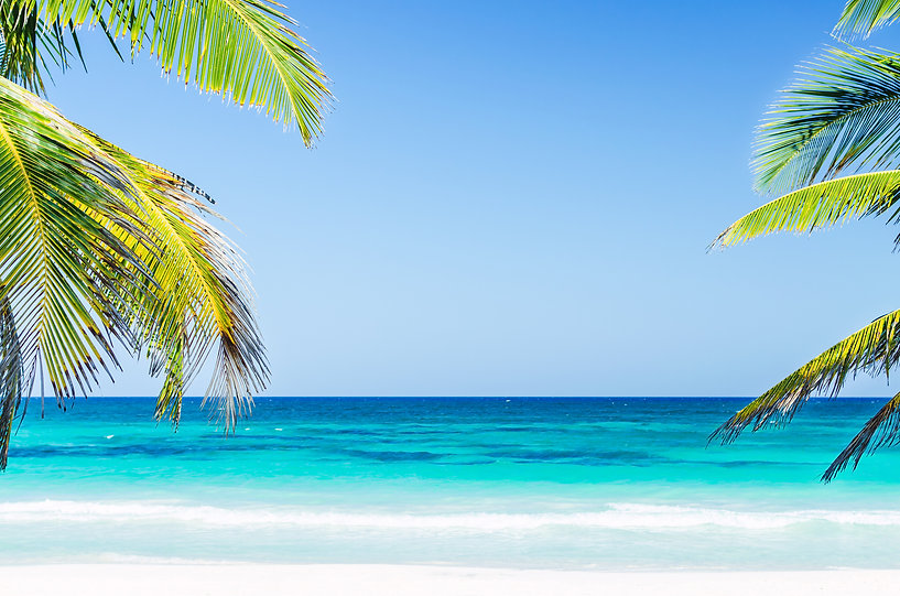 Tropical Seaside View And Palm Trees Ove