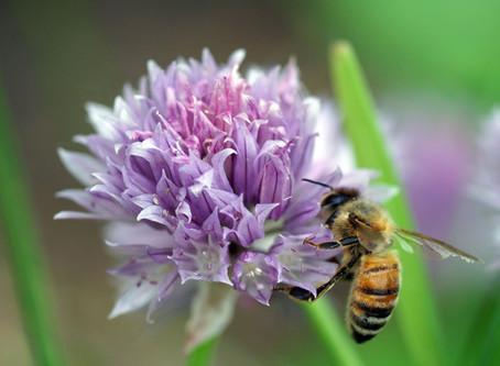 Collecting Native Pollinators