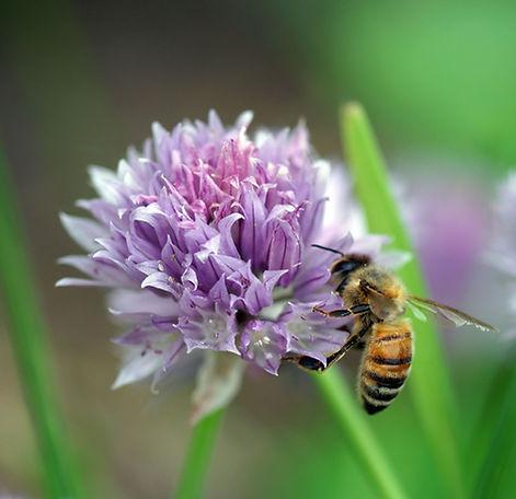 Bee312016.jpg
