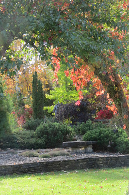 Fall colours in the rock garden.