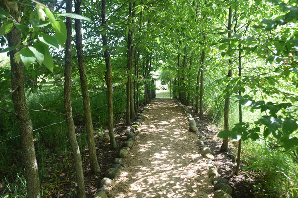 The allee leads to the Nature Trail.
