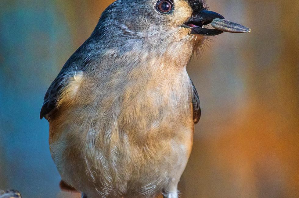Bird_017B - 170130.jpg