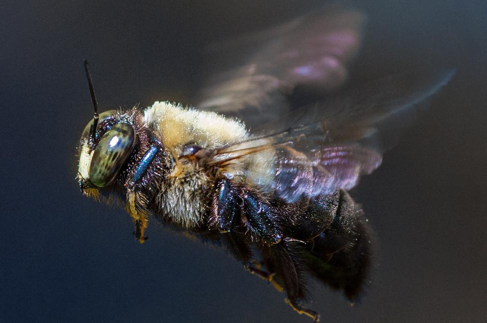 Bee_087b - 140426,27.jpg