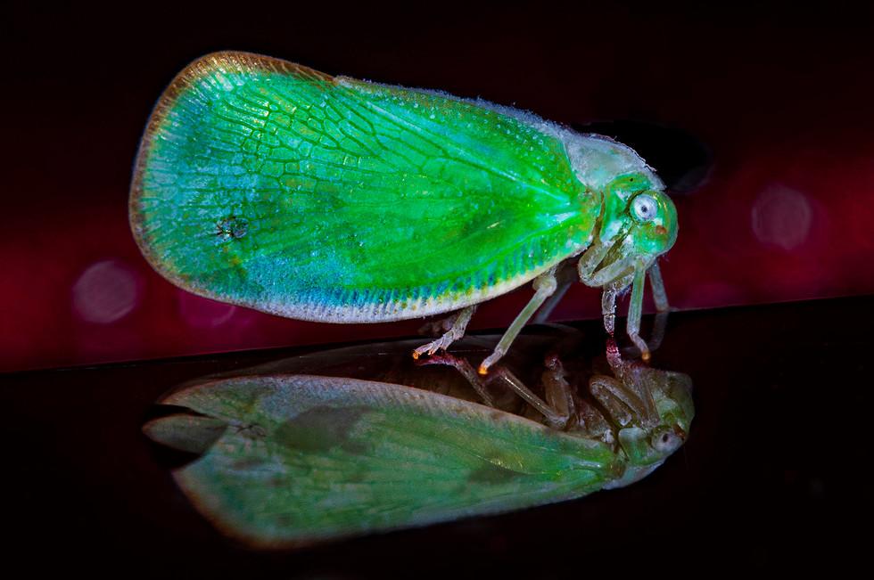 GreenMoth_008B-180705.jpg