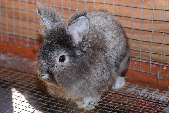 Bunny Adoption