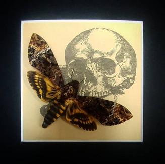 Butterfly Art Inc.