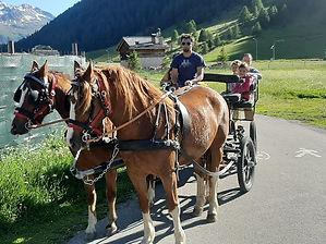 cavallo 21.jpg