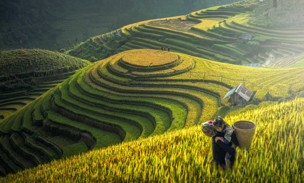 mother-dauther-hmong-working-rice-terrac