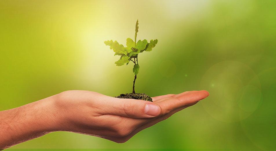 Pflanze Hand.jpg