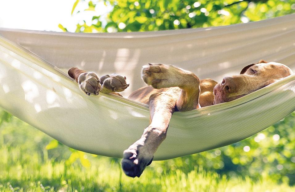 Attersee Urlaubsmagazin Gustav Urlaub mit Hund
