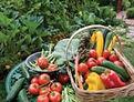 Organic Gardens.jpg