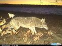 Wildlife Monitoring.jpg