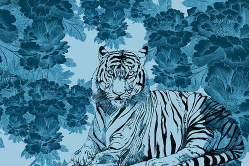 tigris augur