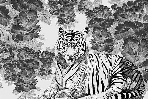 tigris nero