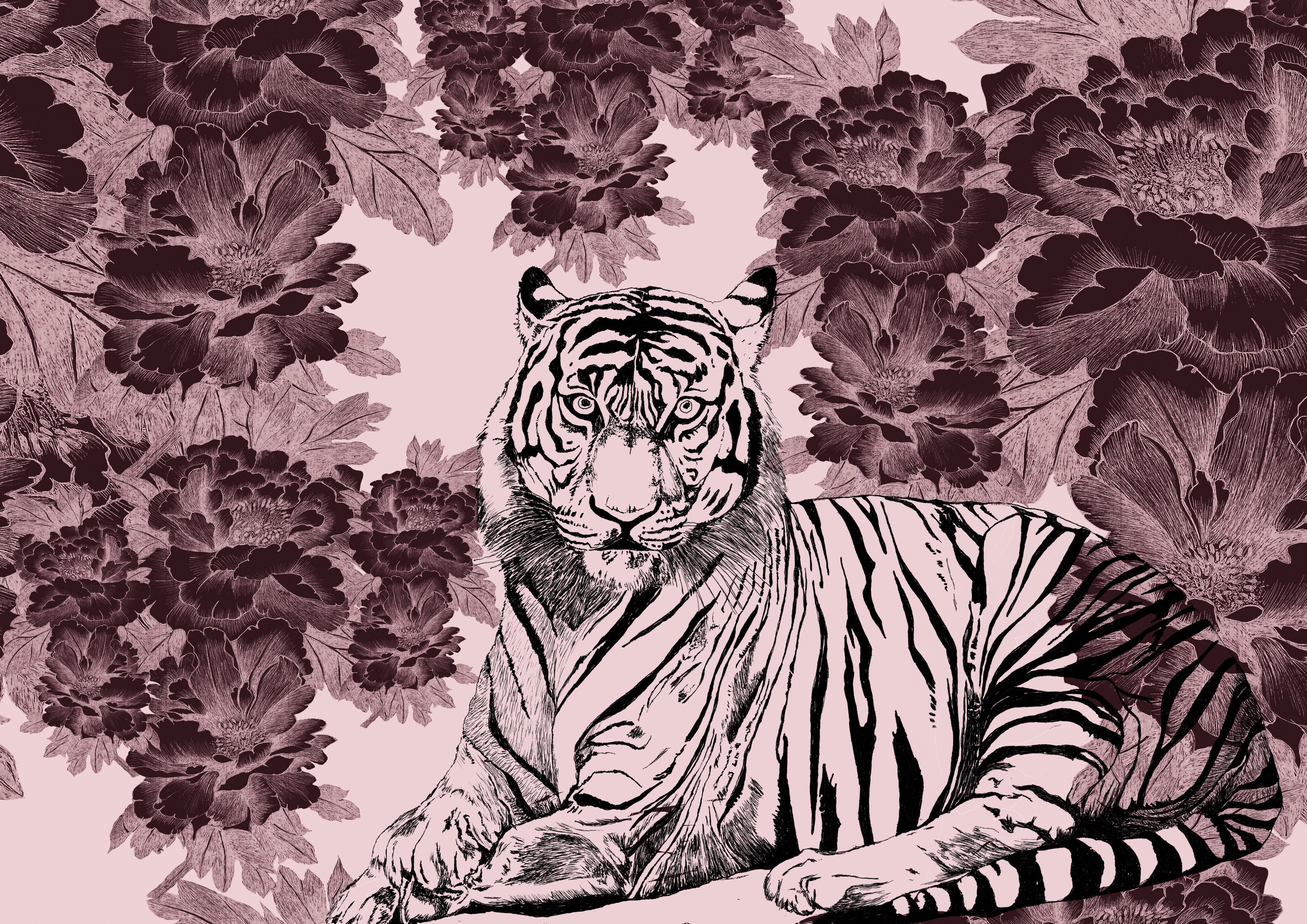 tigris rosea paeonia franck auguste pito
