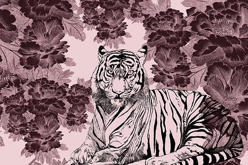 tigris rosea paeonia