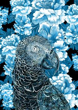 mascarene parrot AGLAOPHOTIS azur franck